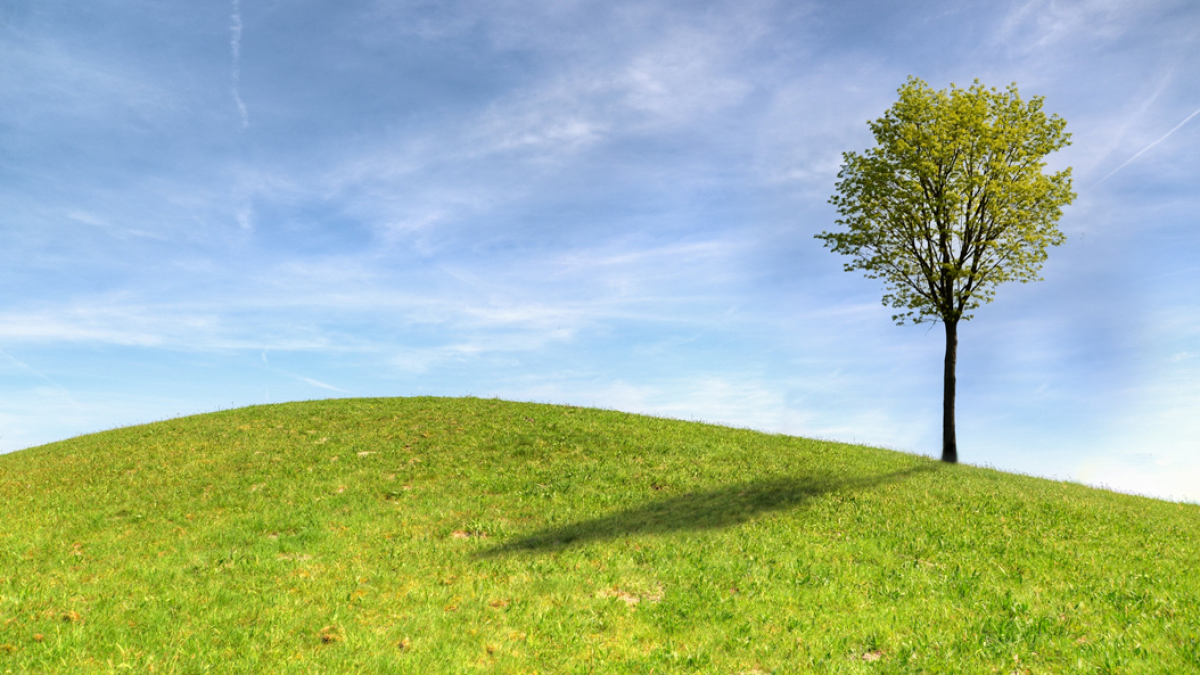 A young tree leafing out near the crest of a grassy hill, with blue sky behind. Image credit: Skitterphoto via Pexels