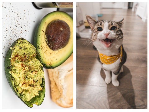 Side by side pictures of guacamole and a cat.