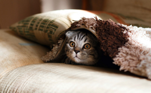 Tabby cat peeking out from underneath a rug or blanket with an alert expression. Image credit: Mikhail Vasilyev via Unsplash
